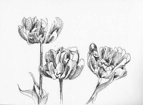 Tulips - pen sketch
