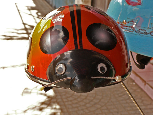 Orange red ladybird helmet