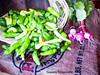 Fresh Green Chili's with Radishes (phil_sidenstricker) Tags: nature radishes produce flickrmeet goldenglobe donotcopy greenchilis valleyofthesunphoenixmetro olympicpicture upcoming:event=981998 southmountainfarmphoenixusa
