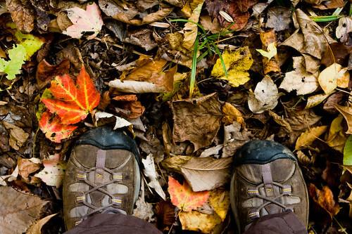 Keens + Leaf Litter