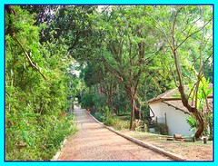 Horto Florestal de Belo Horizonte (gimlemos) Tags: brazil minasgerais brasil garden bresil jardin jardim jardimbotnico belohorizonte botanicgarden floresta mata hortoflorestal mataatlntica bresilien brezilien hortoflorestaldebelohorizonte