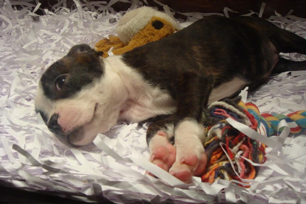 puppy12jpg
