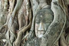 Matathat Buddha Head