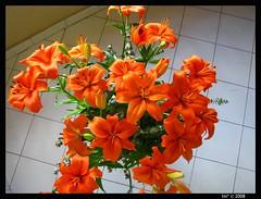 buquet (lin* ) Tags: republicadominicana florafauna