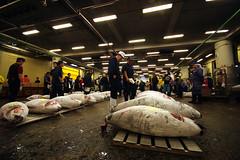 Tokyo (AdrienG.) Tags: fish japan tokyo pentax market sigma tsukiji tuna poisson japon marche thon k20d