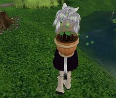 [MnM] Acorn Farm 4