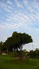 빈탄의 하늘과 나무