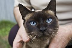 Mirada Felina (JorgeGn) Tags: naturaleza cats nature animal cat eyes ojos gato gata