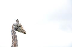 mysore zoo 4