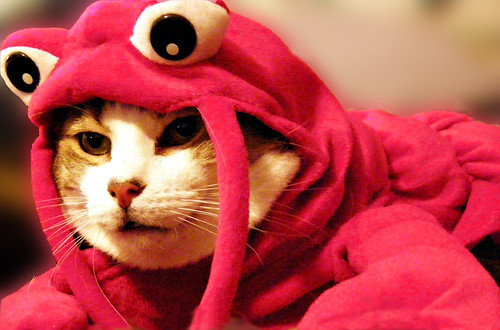 Day 65/365: Lobster Cat