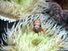 Nemoooooooooo? (RiCArdO JorGe FidALGo) Tags: portugal lisboa oceanáriodelisboa top20fish pffg canoneos400ddigital peixanário fidalgo72 ricardofidalgo ricardofidalgoakafidalgo72 pffgpeixes200803