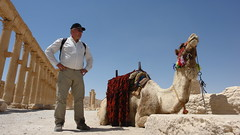 Palmyra - as close as Fred was going to get to this hissing camel (CharlesFred) Tags: peace desert roman middleeast hospitality siria syrian honour  syrien romanruins suriye  syrianarabrepublic  sirie balmera   shoufsyria  palpalmyra   welovesyria aljumhriyyahalarabiyyahassriyyah siri