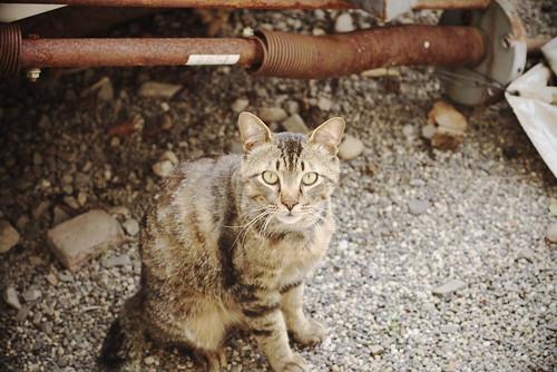Today's Cat@20080605