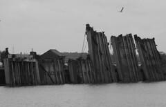 Disused Lock Gates (Simon J. Newbury) Tags: port river point manchester canal gate ship lock gates seagull gull disused mersey weston runcorn ellesmere