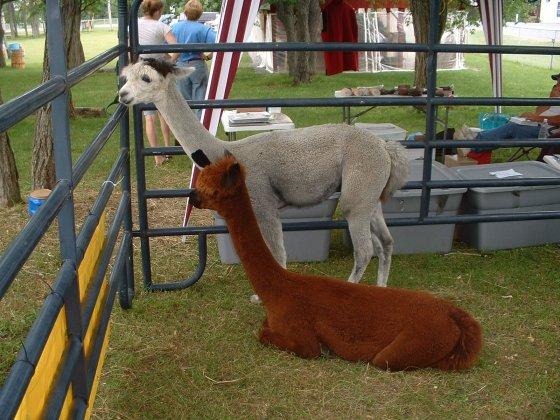stonemills08 alpaca