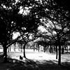 dark doggie knight~* (YENTHEN) Tags: park bw dog tree taiwan streetphotography taipei 台北 doggie 黑白 500x500 新生公園 dogie yenthen