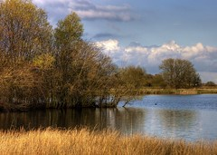 England: Northamptonshire Wetlands. Island Point (Tim Blessed) Tags: uk trees sky nature water clouds reeds landscape scenery lakes wetlands ponds singlerawtonemapped