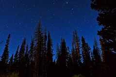 Can't See the Universe for the Trees (Fort Photo) Tags: blue camping trees sky nature silhouette pine night stars landscape evening nikon colorado nightscape nocturnal indigo astrophotography co astronomy universe nocturne eyecandy afterdark bigcreek onblue d300 zirkel catchycolorsblue confier mywinners goldstaraward life~asiseeit