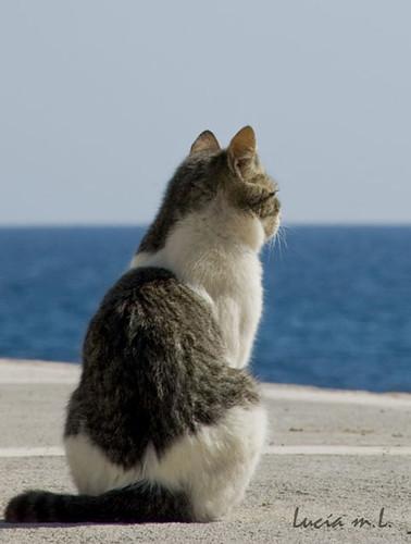 esperando al pesquero¡¡
