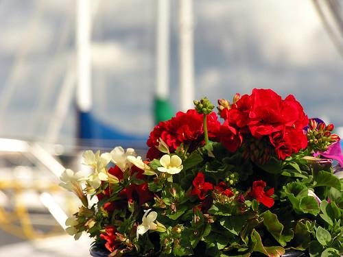 fleur de yacht (anniedaisybaby) Tags: flowers friends summer colour tourism marina bokeh harbour yacht recreation interlake annuals lakewinnipeg hecla gullharbour onlyalittlebitobokeh hey–notexture