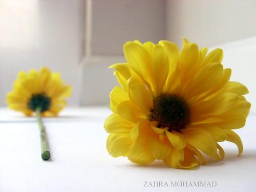الأصفر لون الحب والغيره روووووعة الورد