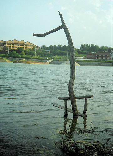 One tree that sets it up in pond