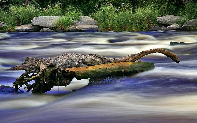 ~ River Log ~