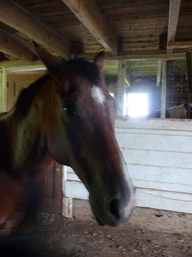 HorseFarm23.jpg by you.