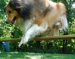Toonie loves to jump