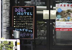 Dogs hotel