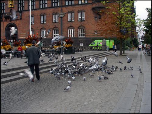 Rådhuspladsen Pigeons