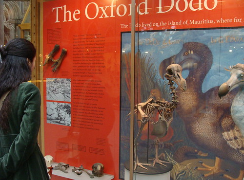The Oxford Dodo.