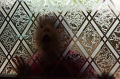 Spooky the Tuff Little Gong (mrjorgen) Tags: printkandidat mrm glass dør glassdør transparent translucent gjennomskinnelig minicardkandidat moocardkandidat
