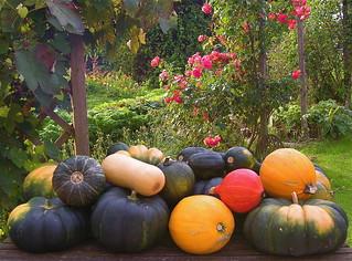 harvest in my garden