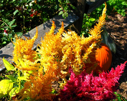 fall is a great time to buy and plant plants, shrubs and trees, Natural flower