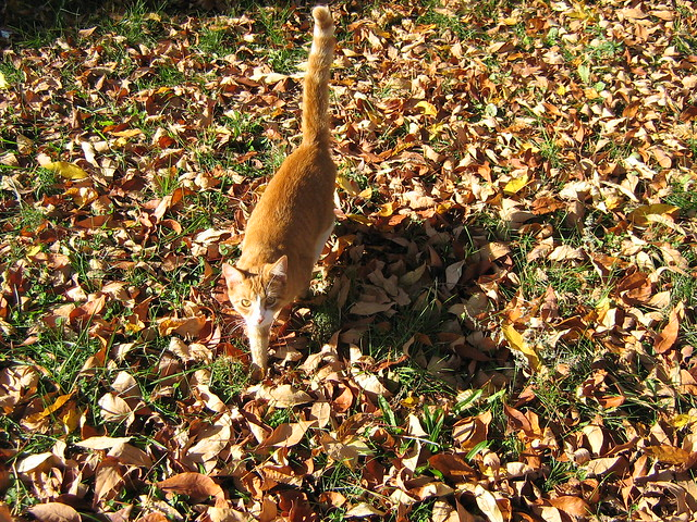 Orange Kitty - biocamouflage