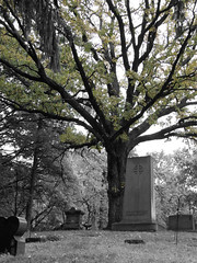 Cemetary thoughts (Sunset Photography) Tags: old portrait usa cold tree halloween church monument beautiful grave minnesota angel photoshop dark dead concrete blackwhite bury scary midwest alone photographer emotion head cemetary creative olympus funeral memory gravestone jody scare amateur mn doityourself selectivecolorization dyi paster southernminnesota intrigueing sunsetphotography sp550uz halloweenworldwide canonrebelxsi jodynewman