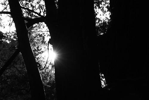 光線&神木