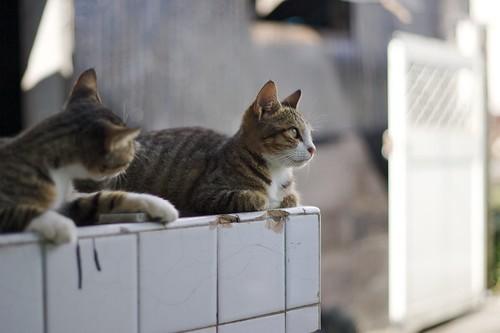 北市街貓;KT攝影
