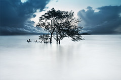 Arbres sacrés | Sacred trees (Erick Loitiere) Tags: longexposure sea cloud sun mer tree beach rain sunrise landscape dawn bravo fineart bourda cayenne shore erick paysage arbre sunray guyane 973 frenchguiana canonef1740mmf4l guyanefrançaise infinestyle 97300 loitiere atqueartificia erickloitière singhrayreversedgnd darylbensonfilters lee105mmpolarizer ricoliki explore1thankyou
