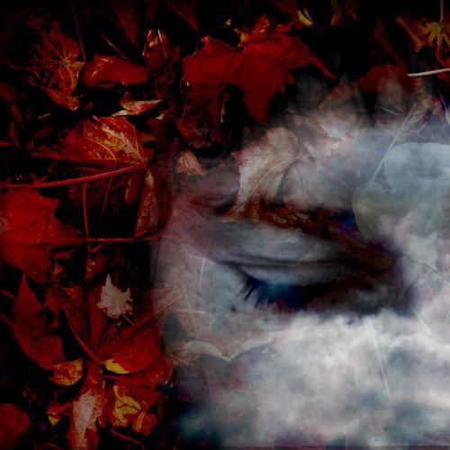 40 automnes sous les paupières