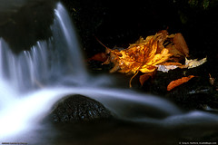 Autumn Stream and Leaves (Greg from Maine) Tags: longexposure autumn red orange fallleaves water leaves yellow contrast wow reflections flow photo leaf rocks stream exposure calendar image stones north maine picture newengland autumnleaves photograph brook flowing 1001nights northern lightandshadow acadia calendarphoto goldenglobe flowingwater blueribbonwinner 5photosaday calendarshot flowingstream fineartphotos naturesgallery anawesomeshot aplusphoto visiongroup flickraward flickrphotoaward excapture theperfectphotographer astoundingimage goldstaraward scenicsnotjustlandscapes worldtrekker gemsofnature qualitypixels flickrlovers topqualityimagesonly vision100 naturescreations artofimages cffaa rocksinstream