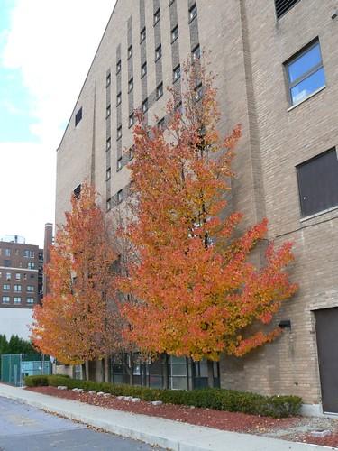 Beautiful Fall Day