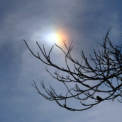 A sign of confidence? (Maureen F.) Tags: bird nature beautiful sparrow parhelion sundog sunflare mondocafe justtotheleftofthesun