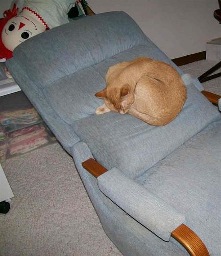 Buttercup reclining