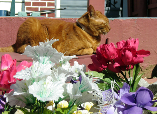 Cat with Artificial Flowers (Click to enlarge)