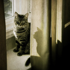 shadow cat (anniedaisybaby) Tags: light shadow baby texture love window cat friend feline tabby grunge grain kitty pride intelligence form shape sweetness windowsill housecat gentleness umbra thelittledoglaughed bestofcats canadianfemalephotographersgroup anniedaisybaby taleofthecat thankyoumy3peas thecatwhoturnedonandoff