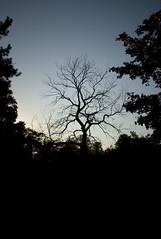 high park tree (swampr0se) Tags: toronto ontario tree highpark