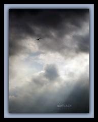 Untitled (Nightwing5-limited Flickr time) Tags: sky nature birds clouds landscapes colorphotoaward goldstaraward dragongoldaward colourvisions damniwishidtakenthat photoartbloggroup dragondaggerphoto nightwing5 inspiredbyyourbeauty