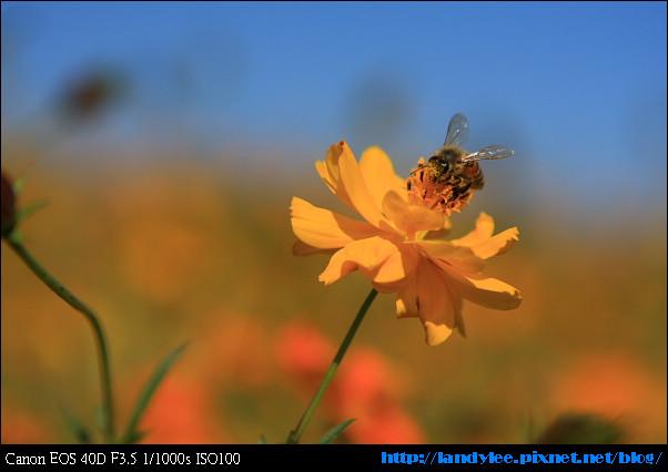 9711-新社花海:Date with Bee_086.jpg